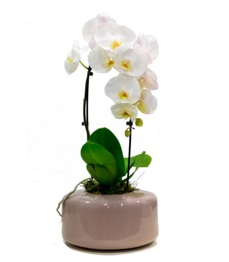 Orquídea en cascada