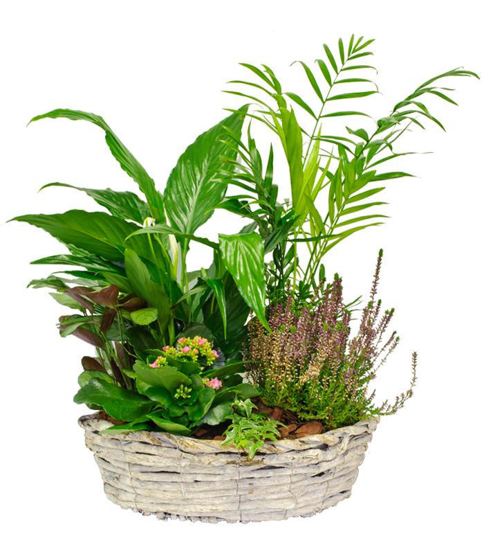 Cesta de plantas variadas de temporada for Plantas temporada