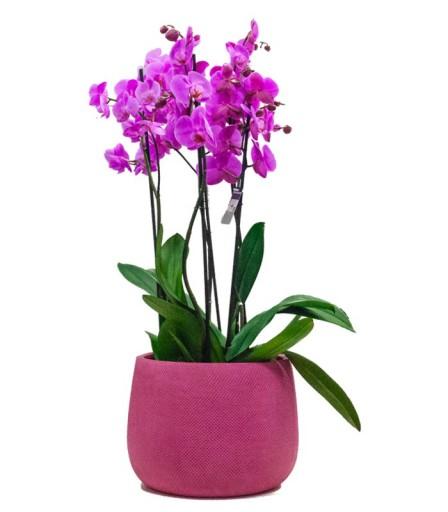 Centro Orquídeas
