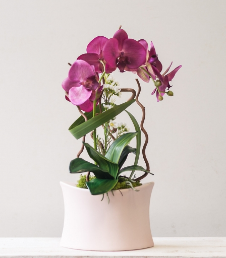 Orquidea rosa