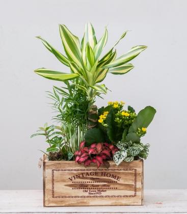Vida cesta de plantas