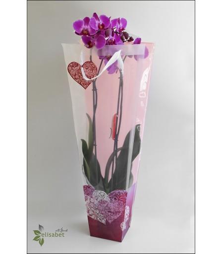 Orquídea regalo